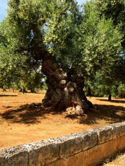 tree w:wall